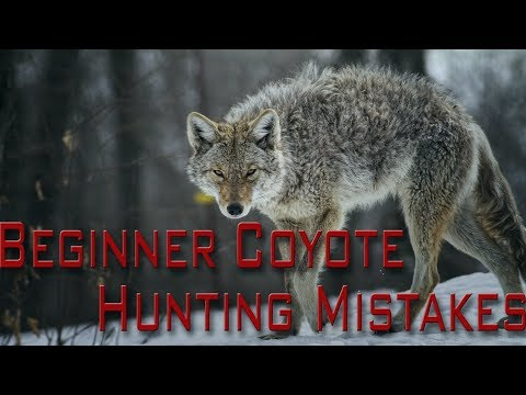 Beginner Coyote Hunting Mistakes | Part One