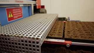 Tray filling machine and seed sowing for forestry by Urbinati