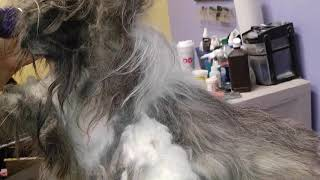 Matted Pup