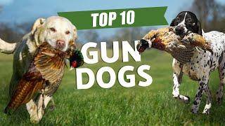 TOP 10 GUN DOGS