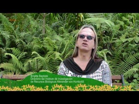 Diálogos con la Naturaleza: Construyendo Puentes de Vida