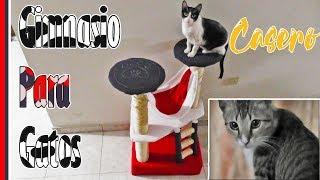 ¿Cómo hacer un gimnasio para gatos? | Tutorial
