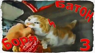Приколы с Животными - Смешные видео 2017 часть 3 - Funny Videos 16+