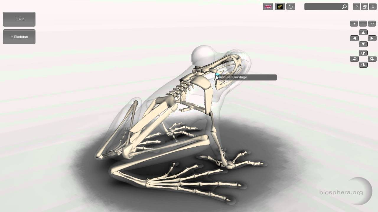Software 3D Frog Skeleton Anatomy for Desktop - YouTube