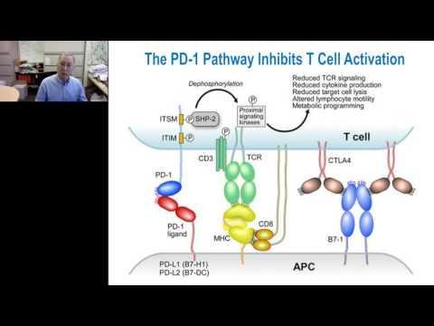 Gordan Freeman-PD-1 cancer immunotherapy