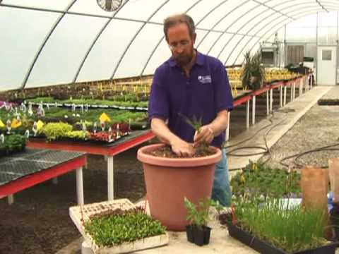 Growing vegetables in containers youtube - Salads can grow pots eat fresh ...