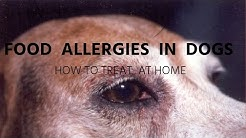 Food Allergies In Dogs: Holistic Answers