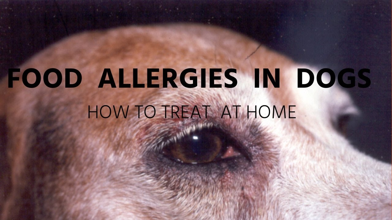 Food Allergies In Dogs Holistic Answers You
