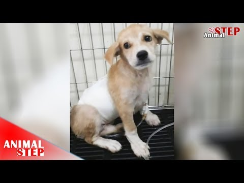 Wounded Stray Puppy Rescued from the Street and Now She's so Blissful – Heartwarming!