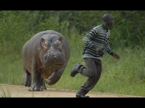 Khi động vật tấn công lại con người
