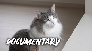 One year with cats | Norwegian Forest Cats