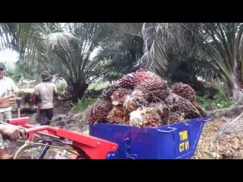 Angkong masa depan untuk angkut kelapa sawit