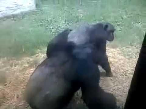 Monkey Mating