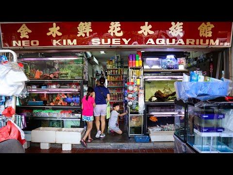 The COOLEST FISH STORE TOUR In SINGAPORE! NKS Aquarium