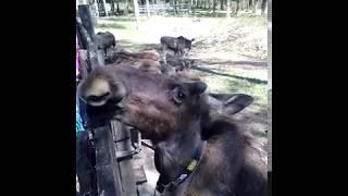 ТК Вологодские Зори. Туры в Кострому из Вологды