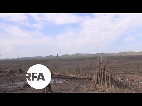 In Myanmar, Barren Hills Where Once Were Lush Forests | Radio Free Asia (RFA)