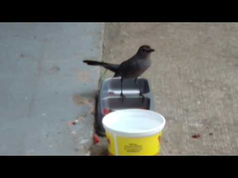 Cat bird eating cat food