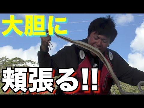 【捕獲した蛇】サバイバル生活 ヤンバル編 3話