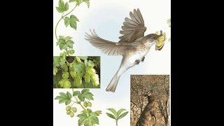 Чем живое отличается от неживого. Ф 2. Урок биологии.
