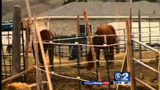 Pay It Forward - Horse Rescue - Mountain America Credit Union