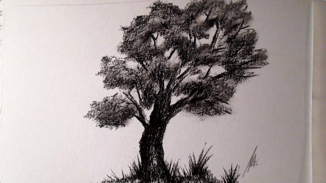Cómo Dibujar Un árbol Al Carboncillo, Cómo Dibujar