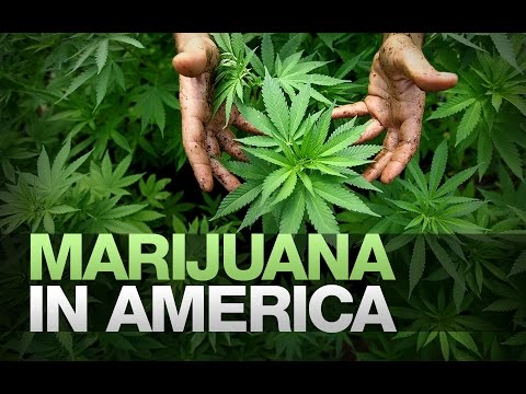 """Black America & The Legal Marijuana Industry"" by Red & Blue Pill"