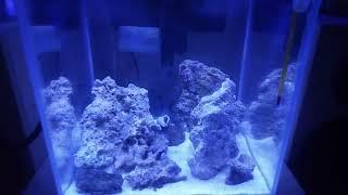 8. Запуск морского аквариума. Что такое живые камни?