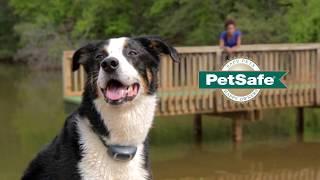 PetSafe® Sistema di addestramento (IT)