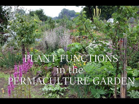 Plant functions in the permaculture garden