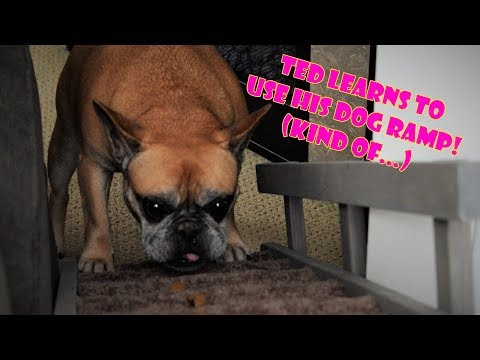 French Bulldog Training 101: Dog Ramp Adventures with Ted