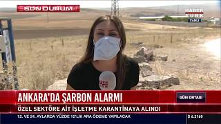 Ankara'da şarbon alarmı