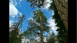 John and Lu Carpino - Under the Blue Arizona Sky (original song)
