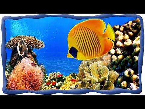 Морские рыбки, Подводный мир, Осминог, скат, акула, рыба лягушка, спинорог Пикассо, рыба-хирург и др
