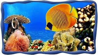 Морские рыбки, Подводный мир, Осминог, скат, акула, рыба лягушка, спинорог Пикассо, рыба-хирург и др(Океанариум в Эйлате часто называют подводной обсерваторией. Это удивительное «окно» в Красное море, через..., 2015-04-09T18:13:41.000Z)
