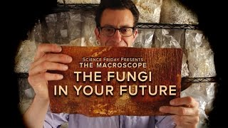 The Fungi in Your Future