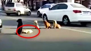 4-dogs-suddenly-block-traffic-then-drivers-realize-they-re-all-protecting-something