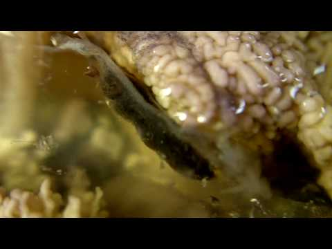 Sea Urchin Dissection