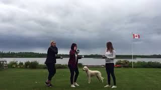 Funny Video: Girl Tries To Shotgun a Beer But Her Dog Obliterates Her