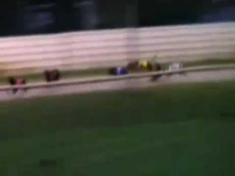 Terrible fall for greyhound at Kilkenny track