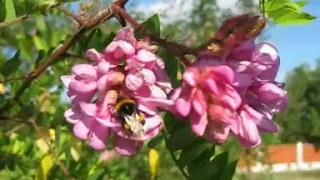 видео Природа Кубани