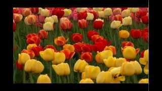 Musica relajante - J.S. Bach - Prelude, BWV. 846-1 - Ritsuko Kobata [Piano]