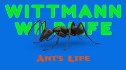 Wittmann Wildlife - Ant's Life