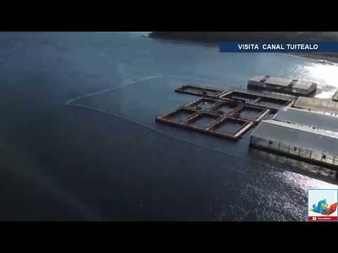 Leonardo Dicaprio exhibe a Rusia por esta cárcel de ballenas