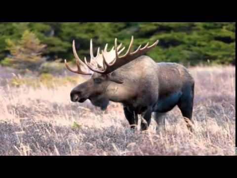 Необъяснимые животные видео. Топ 10 Самых быстрых животных планеты