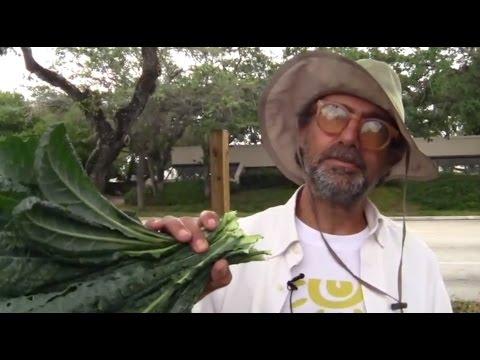 Michael Madfis Urban Farmer Innovator 2014 Part 1