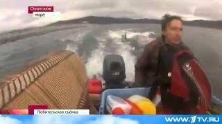 Редкие кадры: Стая касаток провожает рыбаков в Охотском море