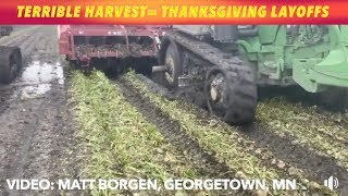 EXCLUSIVE: Terrible Harvest Turns Into Thanksgiving Day Layoffs
