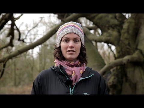 Sylva Foundation - environmental charity