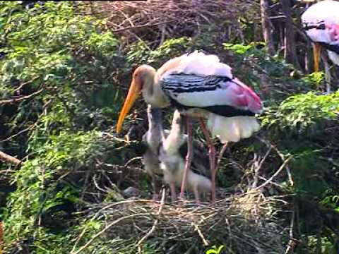 Bharatpur Bird Sanctuary - Documentary on Climate Change Effects on Birds