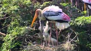 Bharatpur Bird Sanctuary - An Instinct Denied
